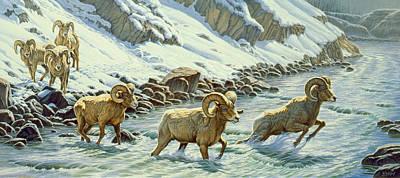 Bighorn Sheep Art Prints
