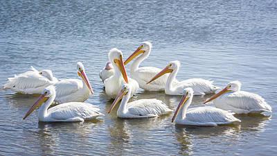 Pelican Island National Wildlife Refuge Posters