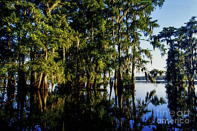 Cypress Swamp Digital Art