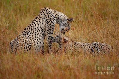 Maasai Photographs