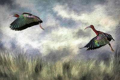 Designs Similar to Glossy Ibis Lift Off