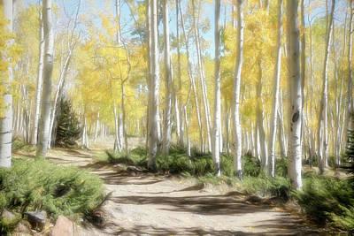Fishlake National Forest Art