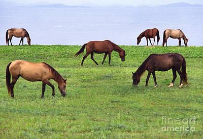 Paso Fino Horse Photographs
