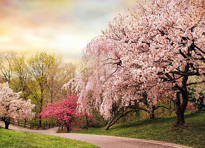 Cherry Blossoms Road Art