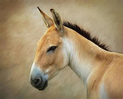 Donkey Photographs