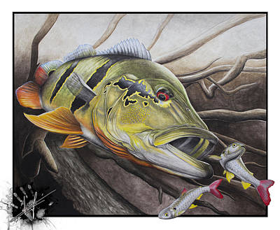 Bass Fish Drawings Fine Art America