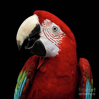 Blue Parrot Photographs