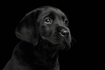 Labrador Photographs