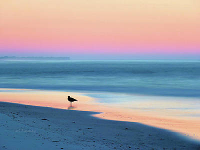 Gull Photographs