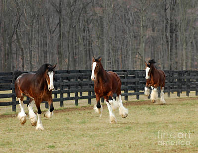 Clydesdale Art