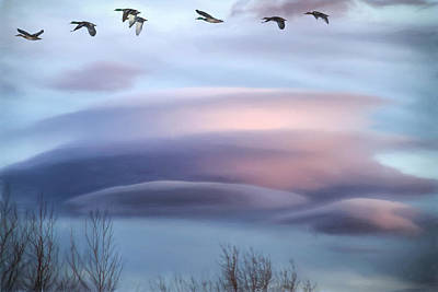 Designs Similar to Flying South by Donna Kennedy