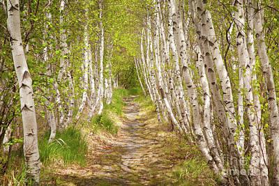 Designs Similar to Spring Birch