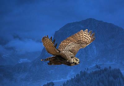 Owl In Flight Photographs