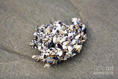 Sea Shells For Sale Prints