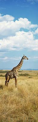 Designs Similar to Giraffe Maasai Mara Kenya