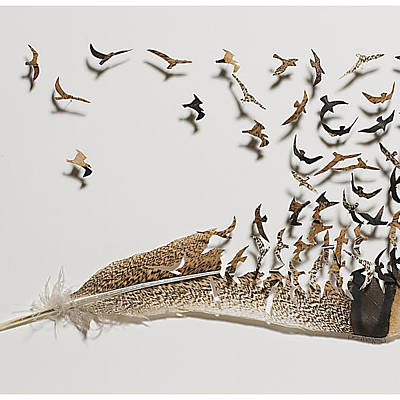 Modern Feathers Art Wall Art