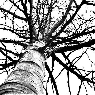 Scott Robinson: Tree Art
