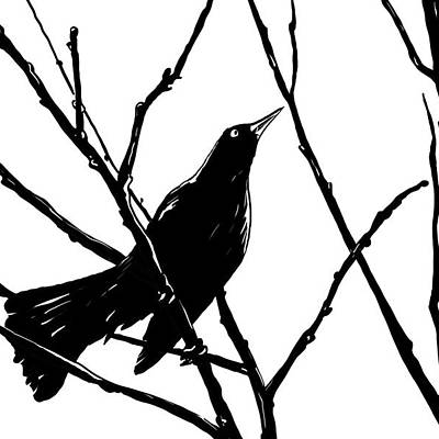 Solitary Drawings