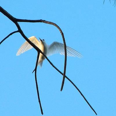 Designs Similar to Tern In Flight