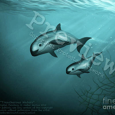 Vaquita Paintings