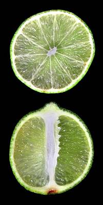 Designs Similar to Halved Limes by Thomas Fester