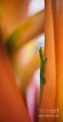 Salamanders Photographs