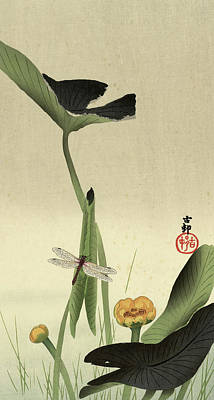 Designs Similar to Lotus, 1930 by Ohara Koson