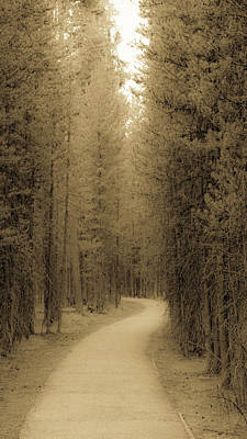 Photograph - The Path Ahead by Donald Rogers