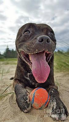 Dog At Beach Photographs