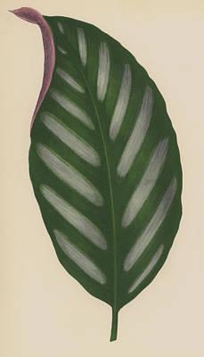 Leaf Venation Art