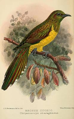 Cuckoo Art Prints