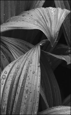 Designs Similar to Botanical by Tony Ramos