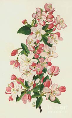 Floribunda Paintings