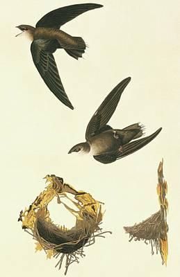 Chimney Swift Art Prints