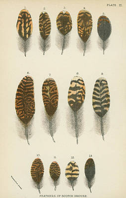 Designs Similar to Feathers Of Scotch Grouse