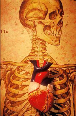 Muscular Organ Prints