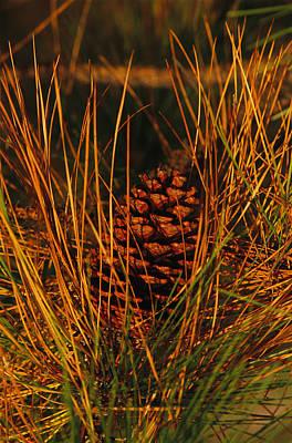 Long Leaf Pine Tree Art