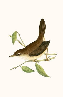 Designs Similar to Cetti's Warbler