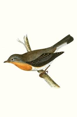 Flycatcher Originals