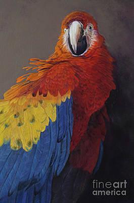 Designs Similar to Scarlet Macaw Three
