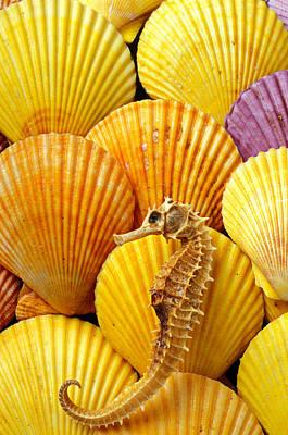 Designs Similar to Sea Horse And Sea Shells