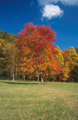 Designs Similar to Autumn Maples by David Hosking