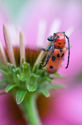 Designs Similar to Red Milkweed Beetle