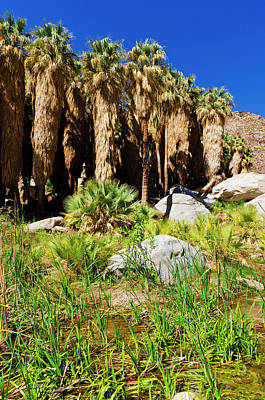 Designs Similar to Stream In Borrego Palm Canyon