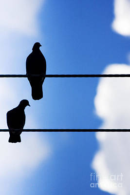 Designs Similar to High On A Wire