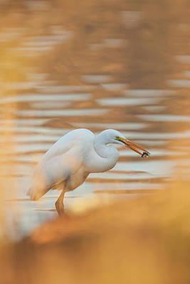 Lake Murray Art