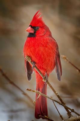 Cardinal Originals