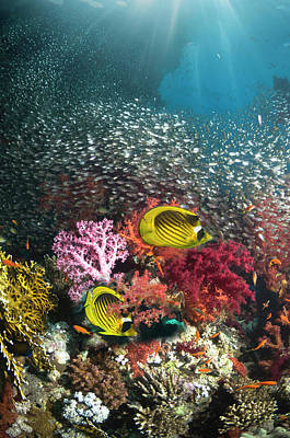 Designs Similar to Coral Reef Scenery