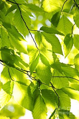 Designs Similar to Green Spring Leaves