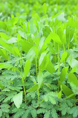 Designs Similar to Acacia Seedlings